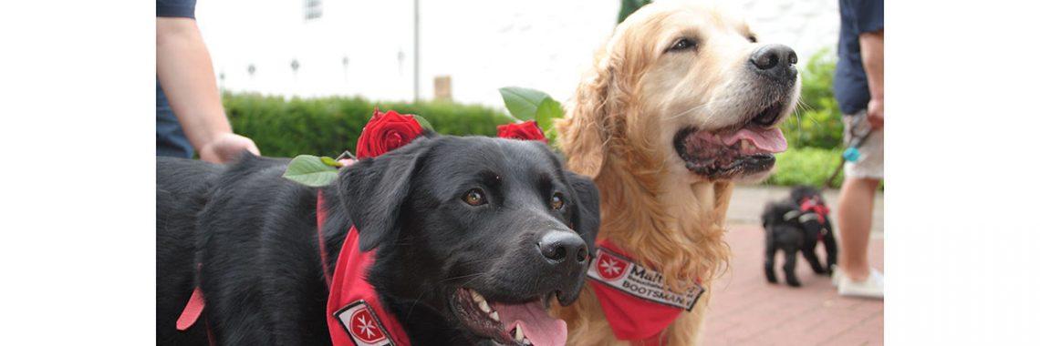 Hundestaffel mit zwei Hunden